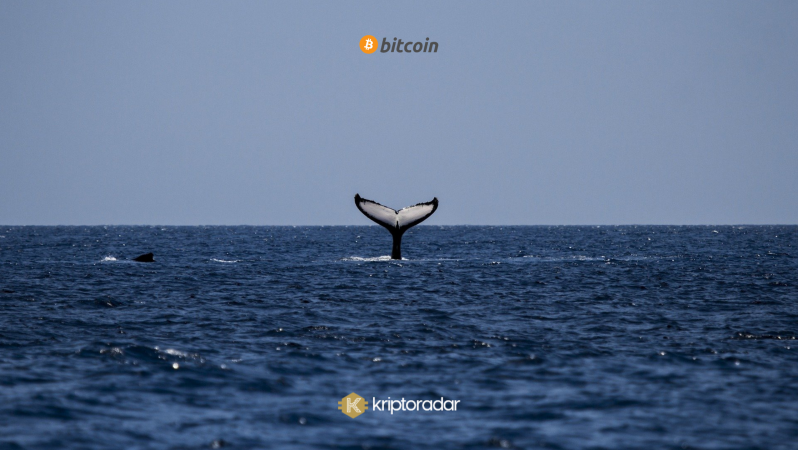 Balinalar Piyasayı Nasıl Kontrol Ediyor?
