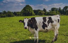 İngiltere'de Ethereum Madenciliği ve Çiftçiler